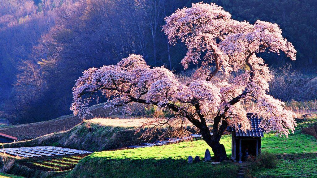 Βάζοντας όρια που γίνονται δέντρα